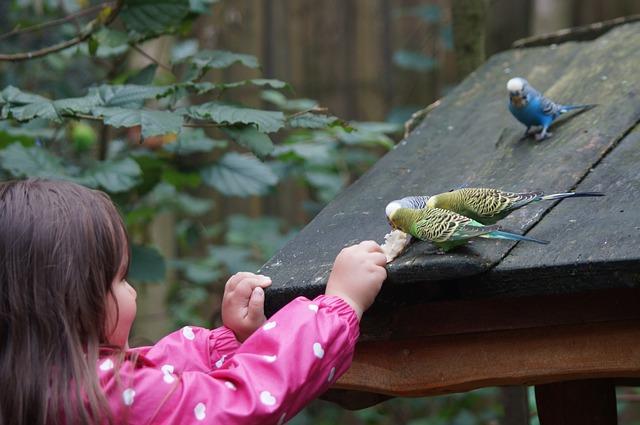 papoušci na střeše